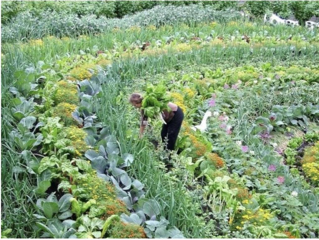 Jardin en permaculture avec une personne jardinant